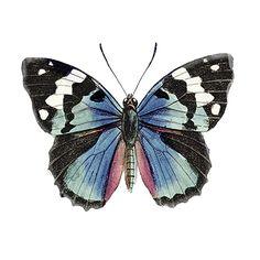RB8987TS <br> borboleta Botanical II <br> 12x12