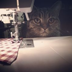 Can the cat sew?