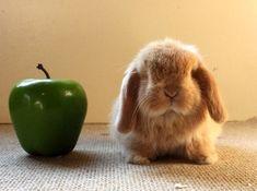 Bunday: Apple