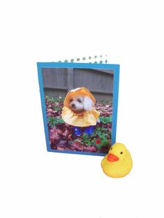 Miniature Toy Poodle Card Get Well Greeting Card by Lillyzcardz, $4.00