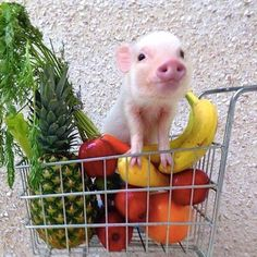 Some cute animals and fresh produce to start your weekend off with a smile #idie