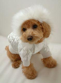 """Venta de la Producción de ropa para perros DOG de PERSONALIZADA """"Daikanyama Nahomilly!"""""""