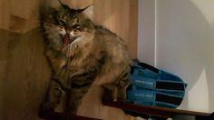 Tutor cat