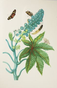 Sibylla Merian, Gouache, Art History, Art Art, Plant Leaves, Collage, Artists, Explore, Illustration