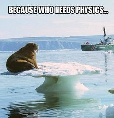 Next on Mythbusters: does gravity affect walruses