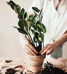 Caring for houseplants can be a tricky thing, but if we have a regular routine it takes the guesswork out of the equation and we can have happy, healthy, and thriving plant babies in no time! So here are some tips to get your indoor jungle thriving! Drain Away, Baby Pop, Water Day, Plant Health, House Plant Care, Terra, Cacti And Succulents, Houseplants, Indoor Plants