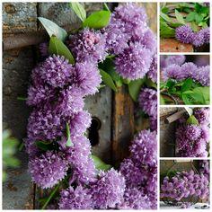 Prairie Charm: Summer herbs / Letné bylinky Floral Wreath, Herbs, Charmed, Wreaths, Vegetables, Pond, Green, Summer, Water Pond