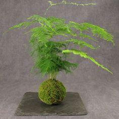 Unique bonsai kokedama Ball Ideas for Hanging Garden Plants selber machen ball Moss Garden, Garden Plants, House Plants, Deco Floral, Arte Floral, Ikebana, Air Plants, Indoor Plants, String Garden