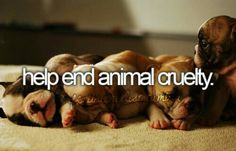 Help end animal cruelty