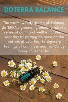 doTERRA Balance Grounding Blend Essential Oil Uses - Best Essential Oils Doterra Balance Oil, Doterra Grounding Blend, Grounding Essential Oil, Essential Oils For Sleep, Therapeutic Grade Essential Oils, Essential Oil Uses, Natural Essential Oils, Doterra Essential Oils, Calm