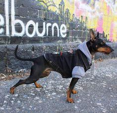 Dog Vest / Denim Dog Vest / Dog Jacket / Black Dog Vest / Black Denim Dog Vest / Metal Dog Jacket /Black Dog Jacket / Cool Dog Jacket by PetHaus on Etsy
