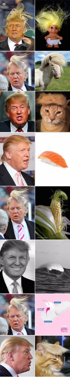 Funny pictures about Donald Trump Look Alikes. Oh, and cool pics about Donald Trump Look Alikes. Also, Donald Trump Look Alikes photos. Stupid Funny, Haha Funny, Funny Cute, Funny Memes, Hilarious, Memes Humor, Wife Memes, Trump Funny, Wife Quotes