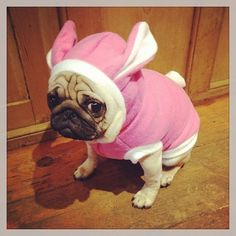 Lolley If i find the outfit will you put ugg muggs in it? The saddest pug bunny ever Baby Animals, Funny Animals, Cute Animals, Cute Pugs, Cute Puppies, Pug Love, I Love Dogs, Pugs In Costume, Costumes