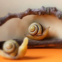 Daily Colours : Beeswax Snails