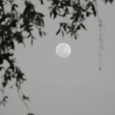 Everyone is a moon and has a dark side which he never shows to anybody.  #nature #click #dslr #streetphotography #oye #soi #nikon #iAMNikon #closeup  #moon #likeforlike #indore_unseen #okla #village #tag4like #followforfollow by therehanansari