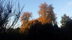 Morgensonne im Herbstlaub, 1. Okt 17