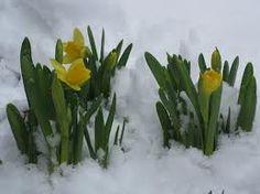 Kevättä