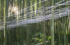 #light and shadow, site-specific #art by Marie-Hélène Richard in a bamboo plantation in #Anduze, France.