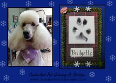 Bridgette is Winter ready with her new doo, and she also walked away with a little Christmas present made with her very own paw print.