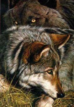 Amazing wolves