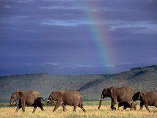 elefantes e arco-íris