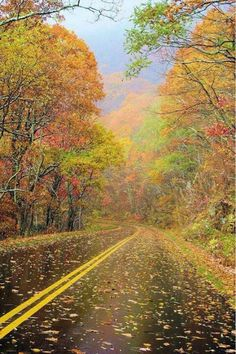 Autumn in Asheville, North Carolina In love with this photo.