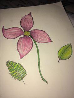 Pretty lil flower 🌼