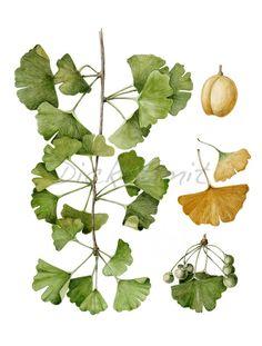 Dick Smit - Botanisch Tekenen - Home