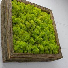 """Green Moss Frame - Water free green wall art, moss and preserved plants - Vertical garden, moss wall decor - 12""""x 12"""" Rustic Frame"""