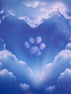 Paw Prints In Heaven - - Regenbogenbrücke - Perros Dog Quotes, Animal Quotes, Dog Paws, Pet Dogs, Doggies, Miss My Dog, Pet Loss Grief, Animal Gato, Pet Remembrance