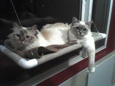 Le fenêtre - l'endroit préféré par les chats peut être vraiment confortable
