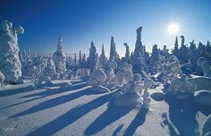 Incredible picture of snow covered trees with the sunrising the the background. Taken in Kuusamo. Snow Covered Trees, Snow Pictures, City Landscape, Travel Memories, Outdoor Recreation, Canoe, Backdrops, Sunrise, Beautiful Places