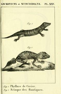 Traité élémentaire d'erpétologie, ou, D'histoire naturelle des reptiles ... / - Biodiversity Heritage Library
