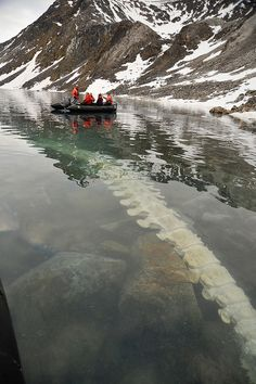 Fin whale carcass the bears have been feeding on for the past year (somewhere between Iceland and Svalbard)