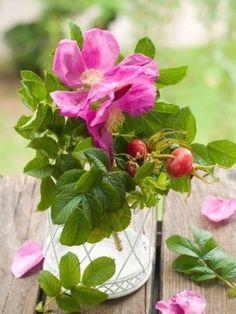 Huile de rose musquée, Huiles végétales pour la peau, Kamelya