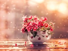 Flowers and light rain by Ashraful Arefin.