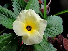 Garden, Plants, Herbs, Nature, Lily, Garden Veranda Ideas, Flora