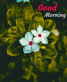Good Morning Images For Whatsapp Good Morning Friends Images, Good Morning Beautiful Pictures, Good Morning Nature, Good Morning Happy Sunday, Good Morning Roses, Good Morning Photos, Good Morning Gif, Morning Pictures, Morning Msg