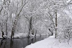 4617-Snowscape
