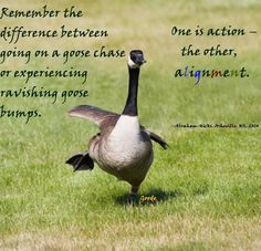 Remember the difference between going on a goose chase or experiencing ravishing goose bumps ~ One is Action~ The Other, Alignment ~•~ Abraham-Hicks