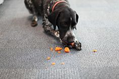 It's #NationalVegetarianWeek ! Lil is forgoing her usual snack today in honour of it.