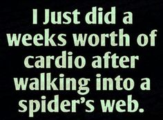 I just did a weeks worth of cardio after walking into a spider's web… hall… I just did a weeks worth of cardio after walking into a spider's web… halloween spider halloween quote halloween humor funny halloween spider web Halloween Humor, Funny Halloween Quotes, Happy Halloween, Halloween Spider, Love Is In The Air, It Goes On, Great Quotes, Funny Quotes, Funny Memes