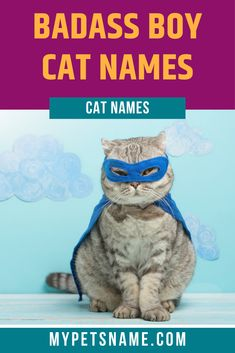 Determined to make your furry friend sound like the coolest Tom on the block? Check out our list of badass boy cat names, from trendy ones like Thor to plain badass ones like Maddox.  #boycatnames #badassboycatnames #catnames Funny Male Cat Names, Boy Cat Names, Cool Pet Names, Silly Cats, Funny Cats, Funny Animals, Cat Breeds, Cool Cats, Fur Babies