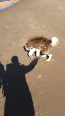 Here's how to play with the dog correctly - Gif dog chases shadow Funny Animal Videos, Funny Animal Pictures, Animal Memes, Funny Videos, Cute Puppies, Cute Dogs, Dogs And Puppies, Doggies, Animals And Pets