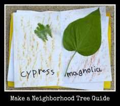 Make a Neighborhood Tree Guide for Kids (Kid World Citizen)