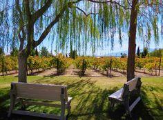 Pahrump Valley Winery Vineyard at Wine Ridge Cottages, Rv, Vineyard, Scenery, Restaurant, Wine, Outdoor Decor, Plants, Photos