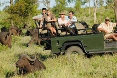 When I was a teenager, I had a dream of going on safari in South Africa. I always wanted to view the wildlife centuries of Africa on the safari. Bull Elephant, African Buffalo, X Picture, African Tops, Dangerous Animals, Wildlife Safari, People Of Interest, Kruger National Park, Luxury Holidays