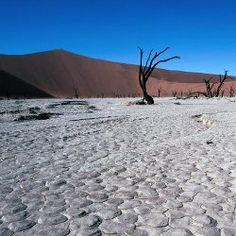 A do-it-yourself Namibian safari - Lonely Planet