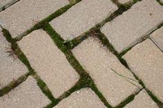 How To Prevent Weed Growth on a Brick Paver Patio or Driveway - IL Stone & Brick Pavers | Walkway Driveway Landscape | Paver Restoration Contractors
