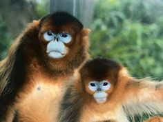 Primate and Monkey Pictures : Discovery Channel